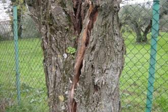 alberopericolante