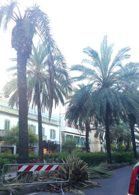 palmaviale