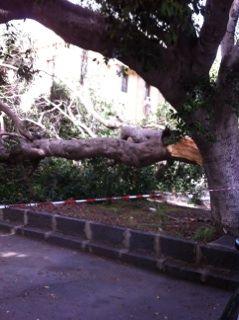 albero tribunale1