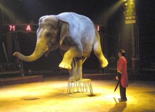 No-al-circo-con-animali