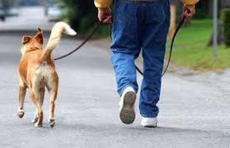 Veleno per topi sul Viale Annunziata: a rischio cani e gatti  della zona