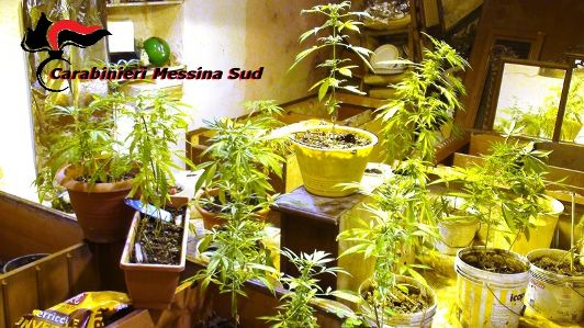 """Rubano energia elettrica per """"alimentare"""" una piantagione di marijuana. Due in manette"""
