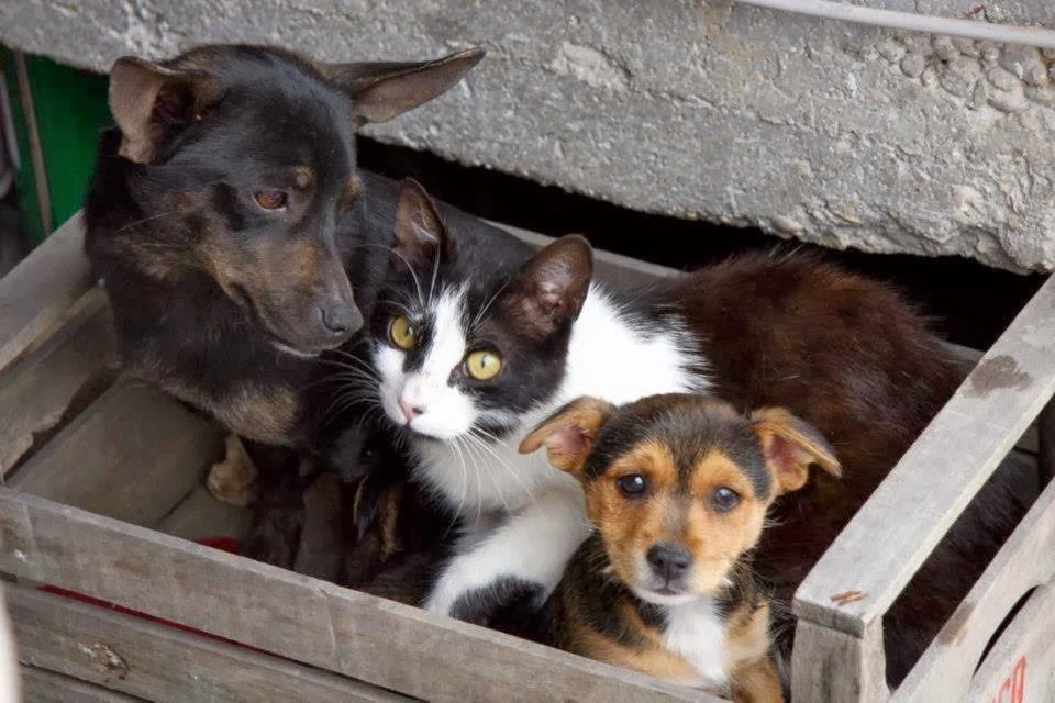 cani e gatti abbandonati