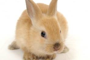 Gestione animali esotici. L'Aae promuove due giornate informative