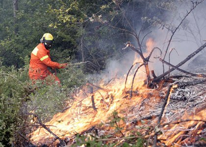 incendi_boschivi