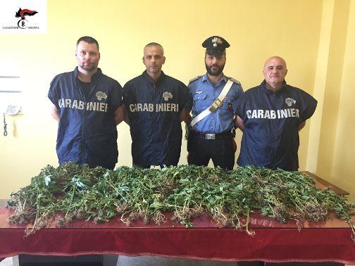 arresto Capizzi