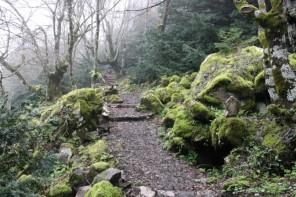 Messina. 1680 forestali a lavoro per creare nuovi boschi e ripulire i torrenti