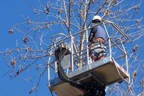 Messina. Al via gli interventi di potatura degli alberi: previste modifiche alla viabilità