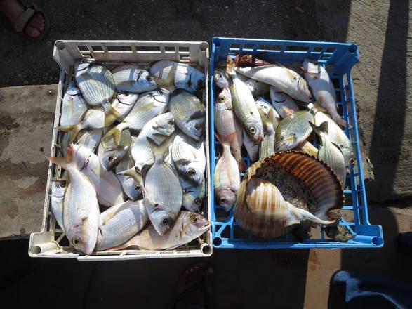 Pesce. ANSA/ RUGGERO FARKAS