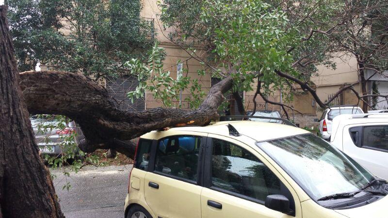 albero caduto auto