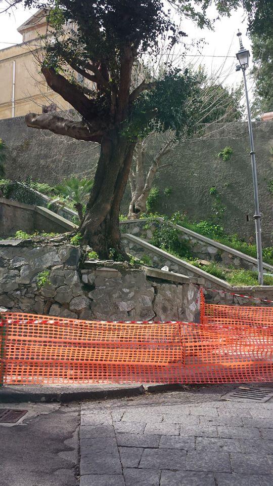 albero piazza basicò