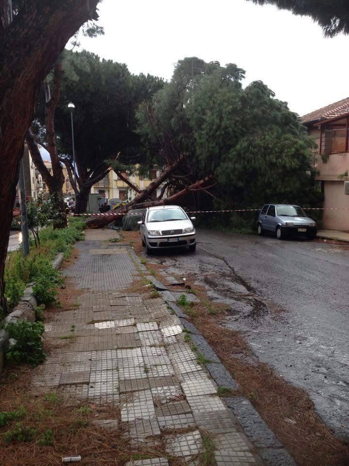 albero san matteo caduto