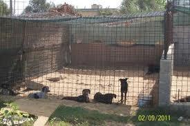 """Canile Millemusi. M5S e animalisti pronti alla denuncia in Procura: """"  Chiarezza sui circa 400mila euro di soldi pubblici"""""""