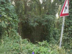 strada-statale-113dir-orto-liuzzo-pressi-bivio-rio-orto-messina-002