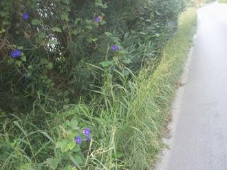 strada-statale-113dir-orto-liuzzo-pressi-bivio-rio-orto-messina-003