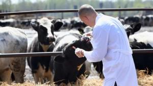 1464034935-0-l-asp-di-ragusa-licenzia-un-proprio-veterinario