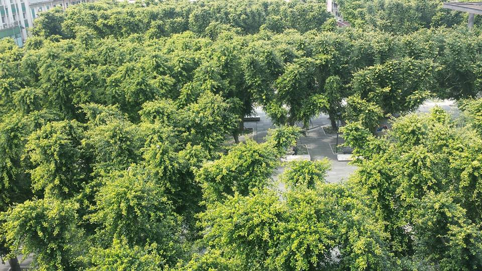 Messina al via la giornata nazionale degli alberi for Ufficio decoro urbano messina