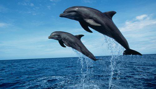Eolie, pescatori in sciopero contro l'invasione dei delfini