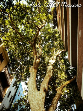 puliamo-messina-verde-urbano