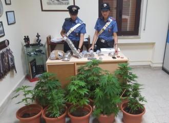Foto delle piante e della marijuana sequestrate dai Carabinieri