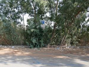 Foto dei cartelli e posti auto coperti da piante e immondizia - Fermata tram Annunziata