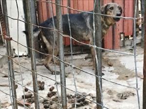 Foto recinti improvvisati canile di Patti