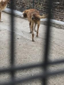 Animali abbandonati - Canile di Patti