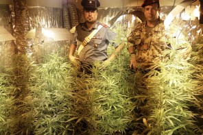 Messina. Arrestato 43enne: coltivava 90 piante di cannabis