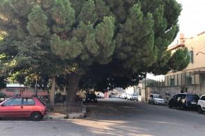Piazzetta Bisconte. Urge potatura degli alberi. Troppi rami pericolanti