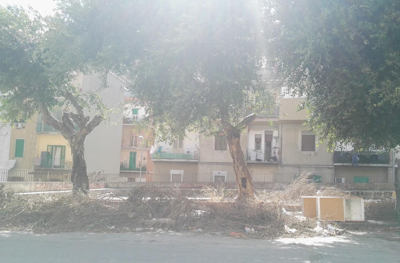 Foto della potatura abusiva a Gravitelli -Messina