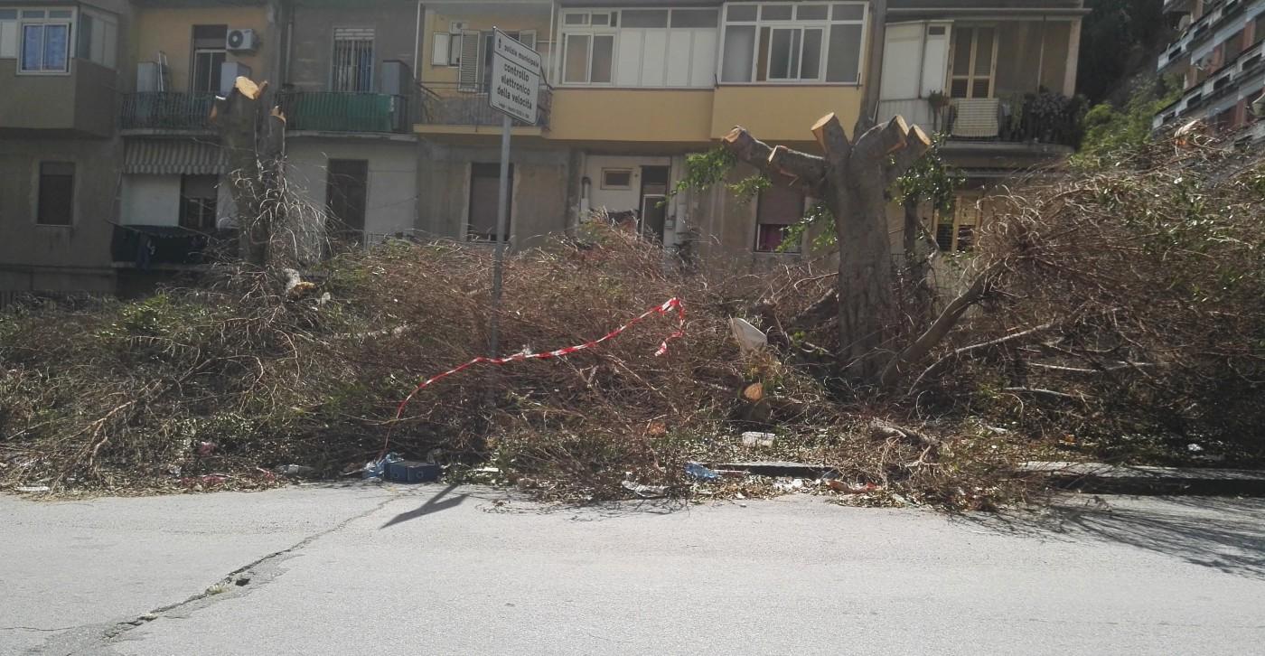 Foto della potatura abusiva nella piazzetta di Gravitelli