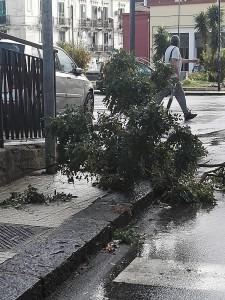 Foto di un albero caduto a Piazza La Corte Cailler (Muricello) - Messina