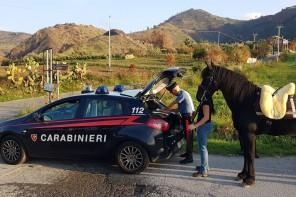 Corse di cavalli clandestine: fermati 18 soggetti per maltrattamento di animali