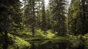 iniziativa Legambiente protezione foreste