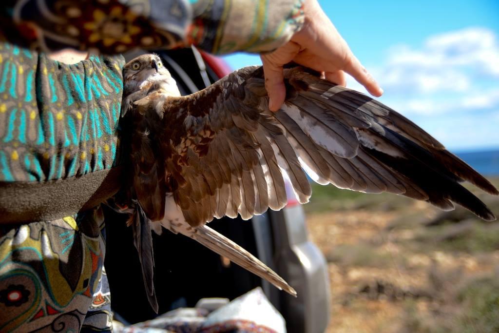 associazione mediterranea per la natura - liberazione