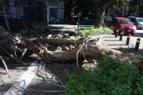 Albero crollato in Via Tommaso Cannizzaro: Cantali punta il dito contro Accorinti