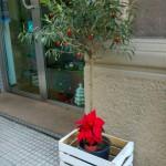 Foto 04 - Addobbi natalizi Messina, Via dei Mille