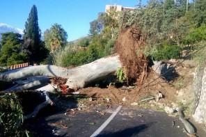 Maltempo. Il vento provoca danni a Messina e Taormina