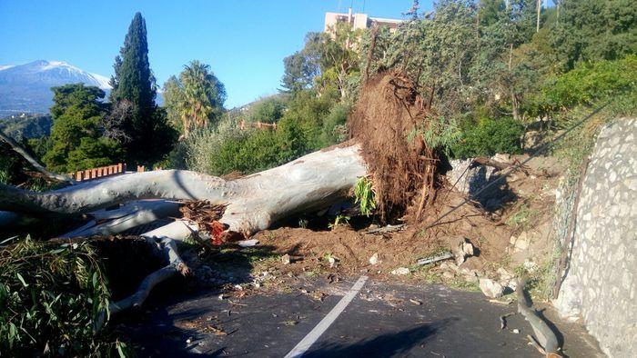 Maltempo albero crollato taormina