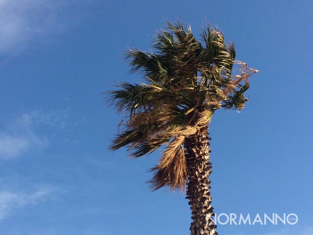 foto di una palma mossa dal vento
