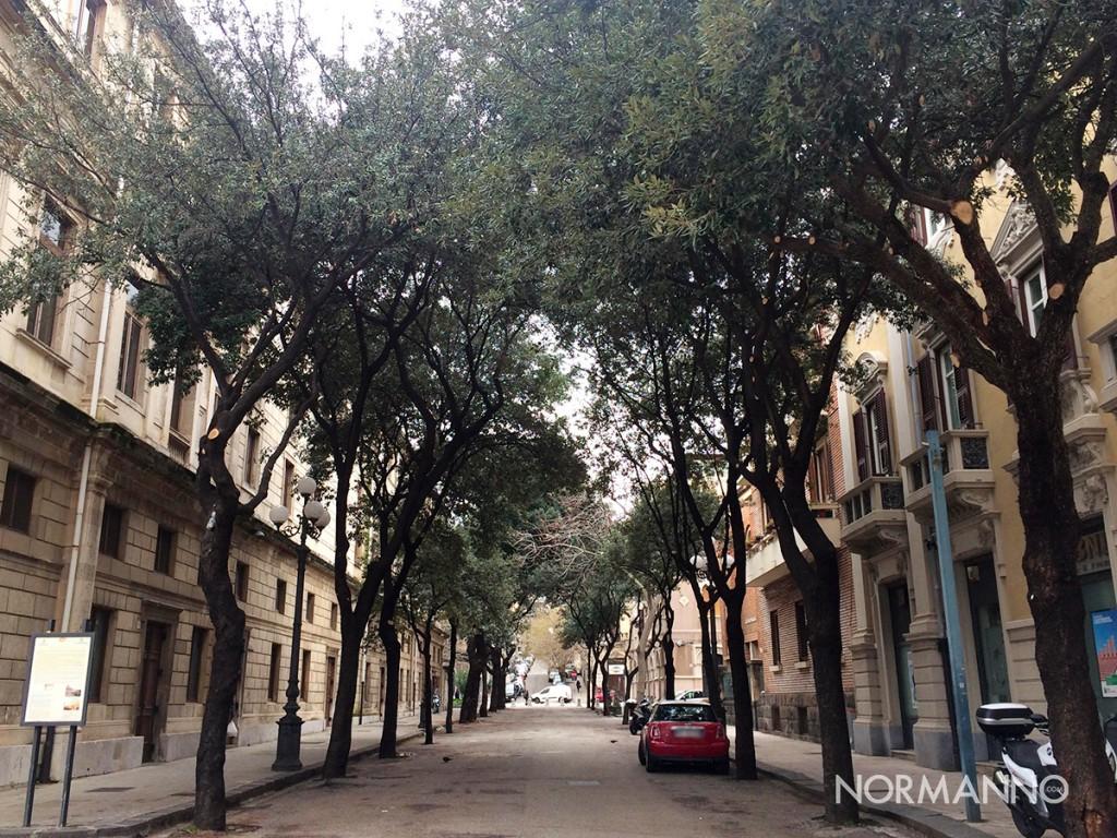via laudamo dopo la potatura degli alberi e teatro vittorio emanuele