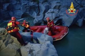 Bloccato nel fiume dell'Ancantara. Vigili del Fuoco salvano Pastore Maremmano – FOTO