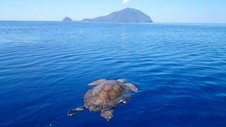 filicudi wildlife conservation - pronto soccorso tartarughe marine - isole eolie messina