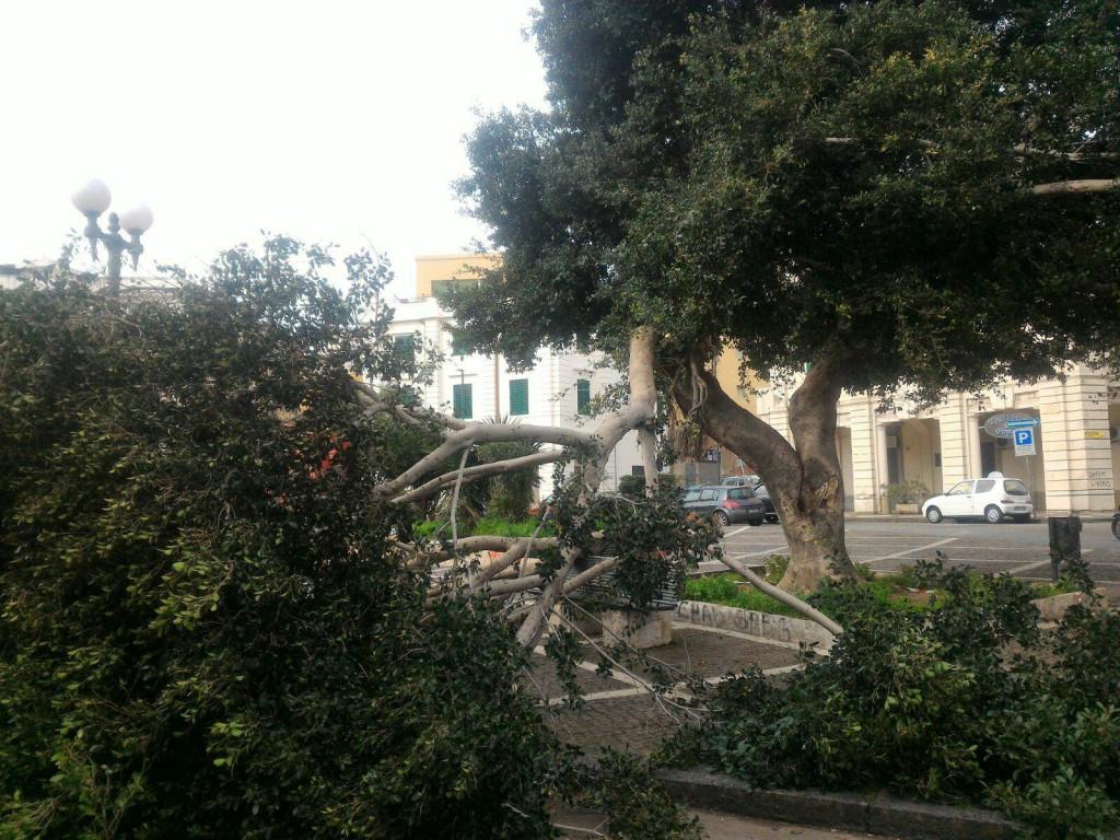 foto dell'albero crollato a Piazza del Popolo