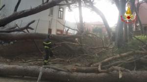 alberi crollati messina