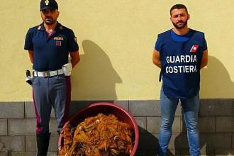Foto del pesce sequestrato da Polizia e Guardia Costiera a Gioiosa Marea