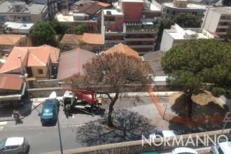 foto degli alberi abbattuti in viale italia