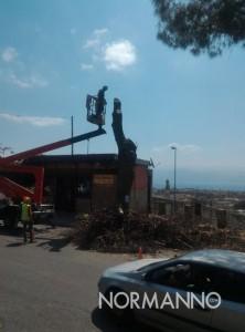 foto di alberi abbattuti viale italia