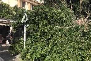 Messina. Controllo degli alberi, Russo chiede chiarimenti su eventuali costi