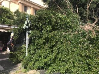 albero crollato in via tommaso cannizzaro